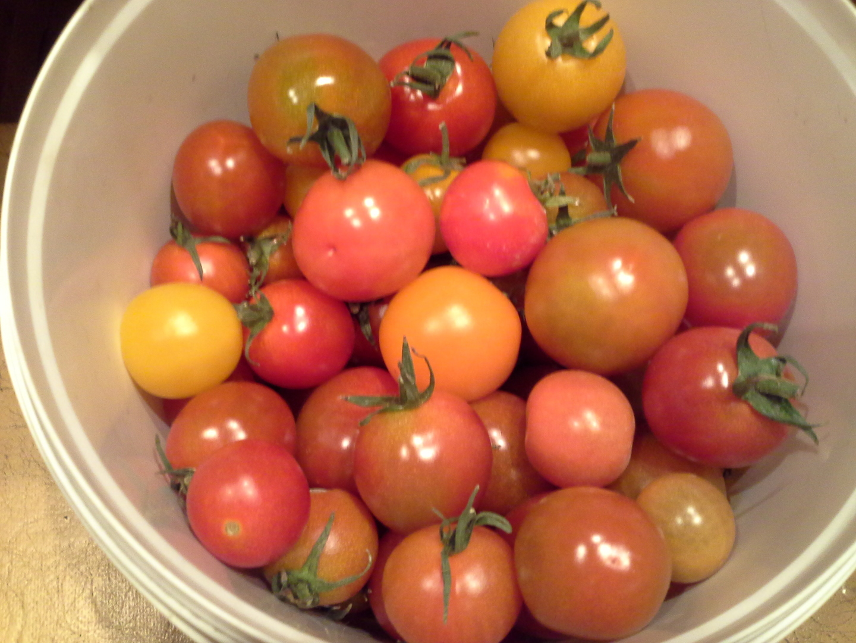 томатов фото бурых